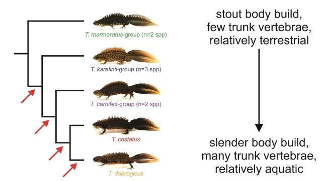 36 seqcap phylogeny.jpg